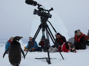 An Adélie penguin approaches a camera tripod