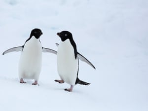 Adélie penguins outside the Akademik Shokalskiy