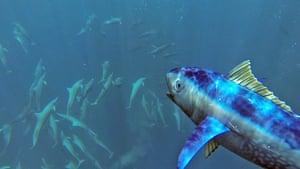 Dolphin Megapod: Spy Tuna