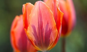 A former Dutch central banker has said that the bitcoin bubble is as bad as tulip mania.