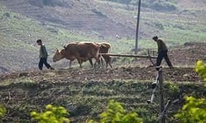 North Korea farming