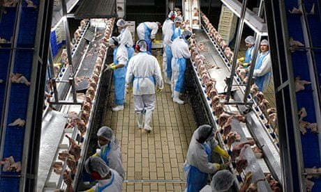 Supermarkets Selling Chicken That Is Nearly A Fifth Water World
