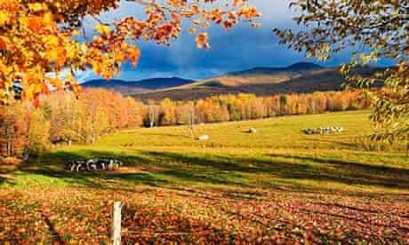 Fall colours, cows in field and Mont Sutton, Sutton, Eastern Townships, Quebec