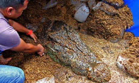 Lolong, crocodile