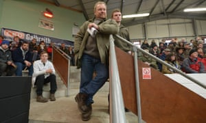 Here are some of the farmers watching the parade of cattle in the auction ring.