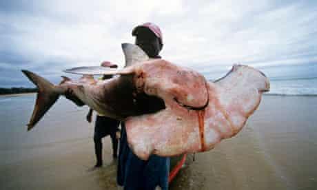 Fisherman with hammerhead shark, Inhassoro, Mozambique