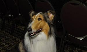 Lassie, Westminster dog show 2013