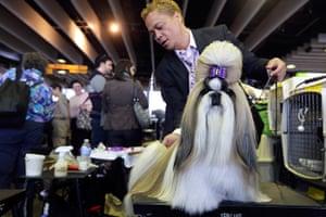 Westminster Dog Show: Craig Garcia grooms Fire