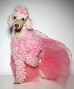 Your Pictures - Glamour: pink coloured dog with pink veil