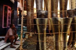 FTA: Beawiharta: Wakira smokes a cigarette near pieces of dried snake skin