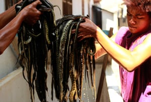 FTA: Beawiharta: Workers hold snakes for skinning