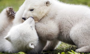 After staying in a maternity cave with their mother Frimas for two months, young polar bears Noordje and Pixel spend their first time in the open air of Dierenrijk Nuenen Zoo in Nuenen, The Netherlands.