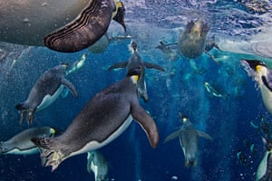 WPP: Paul Nicklen of Canada was awarded 1st prize in Nature Stories