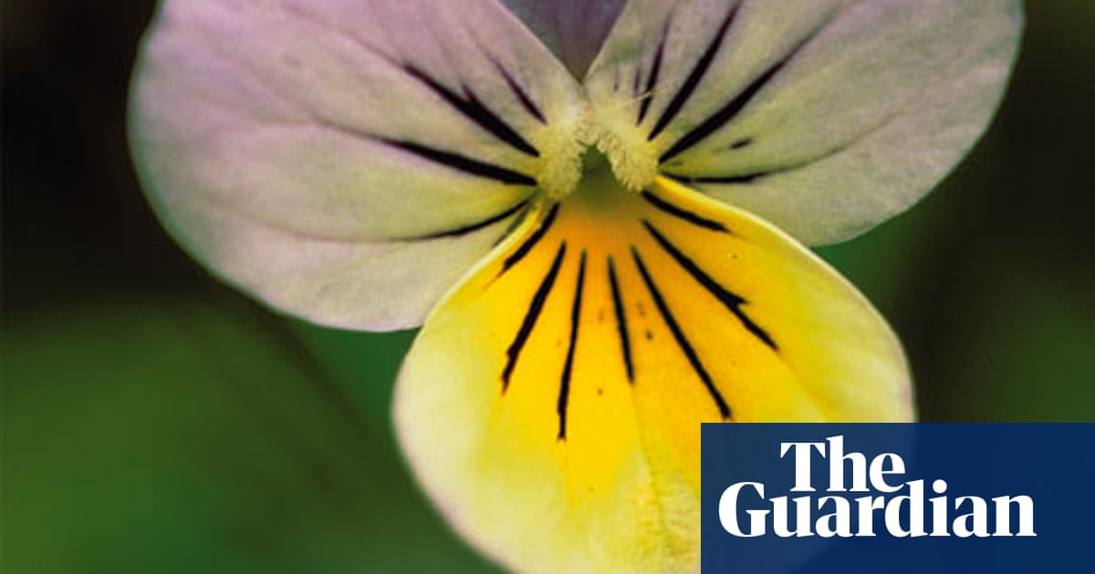 Gardens Edible Flowers Life And Style The Guardian