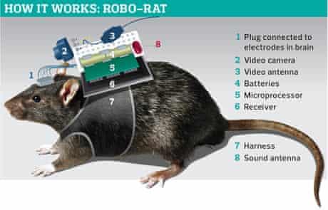 Robo-rat graphic
