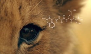 A lion's eye showing a graphic of a peptide from the protein crystallin