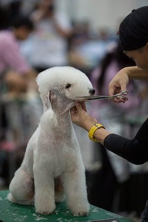 24 hours: Hong Kong Pet Show