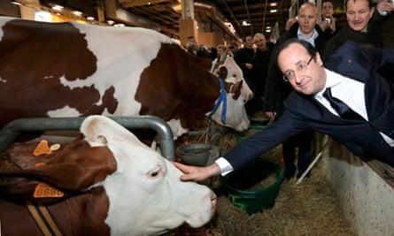French president Francois Hollande strokes a cow at the Paris agricultural fair