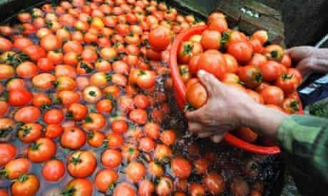 chinese tomatoes