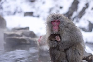 Feb BT gallery: Japanese macaques