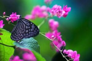 Feb BT gallery: Butterfly Park in Kuala Lumpur
