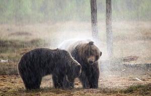 Feb BT gallery: brown bears