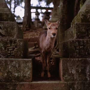 Feb BT gallery: Nara world heritage site, Japan
