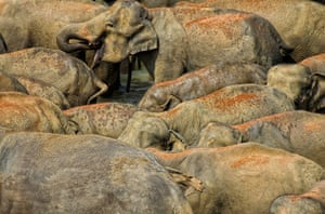 Feb BT gallery: Pinnawala Elephant Orphanage