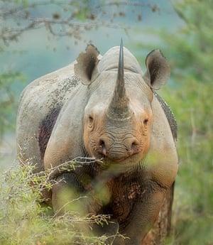 Feb BT gallery: Umfolozi national park