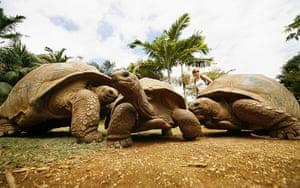 Feb BT gallery: giant tortoises