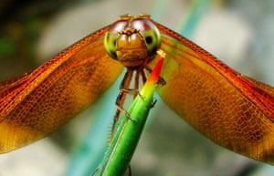Feb BT gallery: ragonfly was taking a break on a plant in Yogyakarta, Indonesia