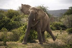 Feb BT gallery: Shamwari game reserve in South Africa