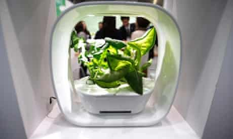 This is not just any vegetable...this is a vegetable growing in a hydroponic culture unit with light-emitting diode (LED) lights on display at the Third Eco House & Eco Building Expo in Tokyo, Japan. Now that's a mouthful.