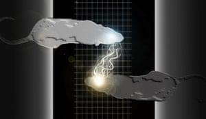 brain-to-brain interface