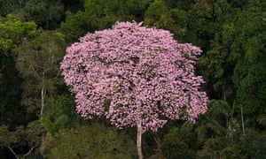 Rainforest canopy with flowering tree