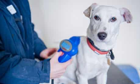 Compulsory dog microchipping