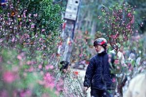 Lunar New Year: A man sells peach blossoms in Hanoi, Vietnam