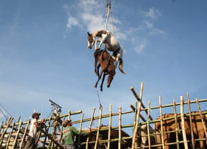 20 Photos: In Surabaya, Indonesia, horses are hoisted into the air by a crane