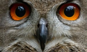 An eagle owl keeps a close eye on its keepers during the annual inventory at the Schwarze Berge wildlife park in Hamburg, northern Germany. All animals of the park were counted, measured and weighed during the stock take.