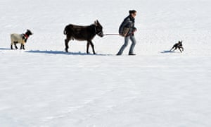 Has Noah built a new in Austria? Silvia Parigger enjoys a walk through the snow with her goat Charly, her donkey Kenobi and her dog Murphy in Lofer, in the Austrian province of Salzburg. The weather forecast predicts sunny weather for the upcoming days.