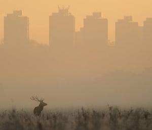 Mammal Society: Photographer of the Year 2013