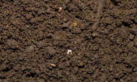 Weed free garden soil