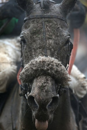 Starluck covered in mud after the Vincent O'Brien county handicap hurdle during the Cheltenham Gold Cup day.