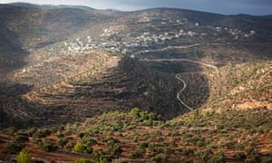 Palestinian olive farms in the hills of the West Bank