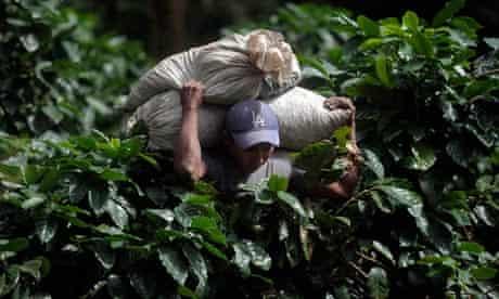 coffee-fungus