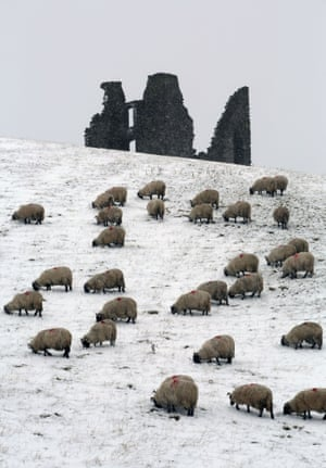 Heavy snow in the Borders and many areas of Scotland are causing concern for farmers as they prepare for the lambing season.