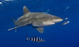 overfishing examples