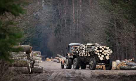 An unprotected forest is cleared in Poland