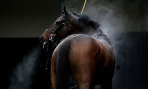 A horse is washed down after the Thwaites Novices Hurdle at Warwick Racecourse, England. Photograph: David Davies/PA