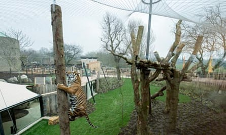 the new Tiger Territory at London Zoo.